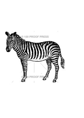 100 Proof Press Stamp Handsome Zebra