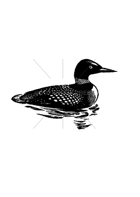 100 Proof Press Stamp Loon in the Water