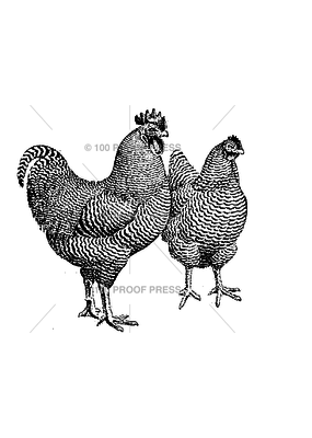 100 Proof Press Stamp Pair of Fowl