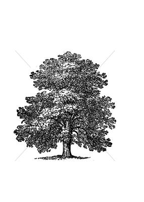 100 Proof Press Stamp Mature Oak Tree