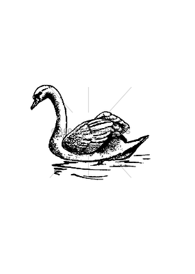 100 Proof Press Stamp Floating Swan