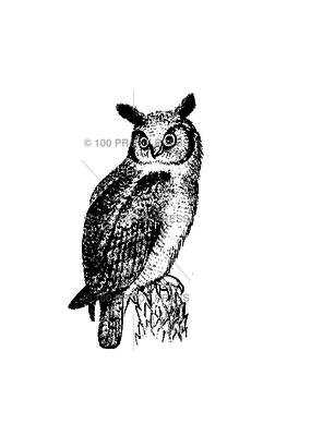 100 Proof Press Stamp Owl Looking Left