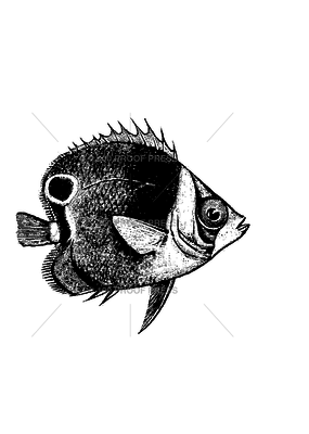 100 Proof Press Stamp Fish