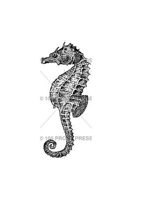 100 Proof Press Stamp Seahorse