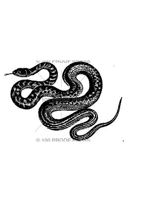 100 Proof Press Stamp Slithering Snake
