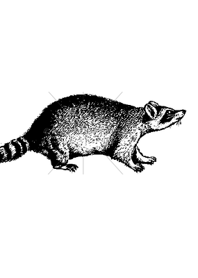100 Proof Press Stamp Crouching Raccoon