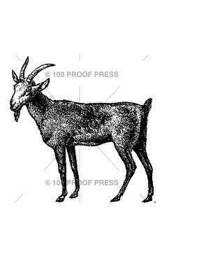 100 Proof Press Stamp Dark Billy Goat