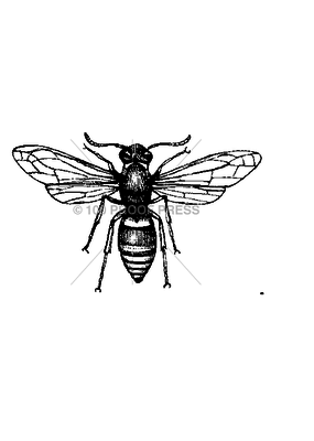 100 Proof Press Stamp Paper Wasp