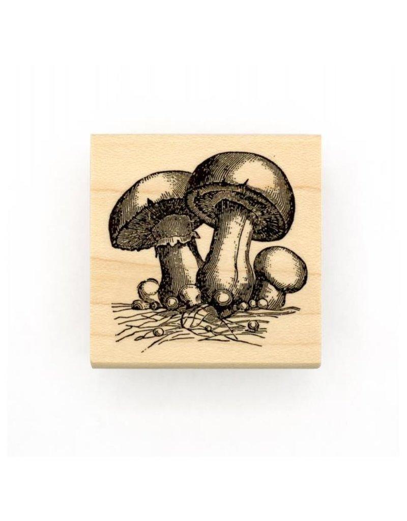 Leavenworth Jackson Stamp Mushrooms