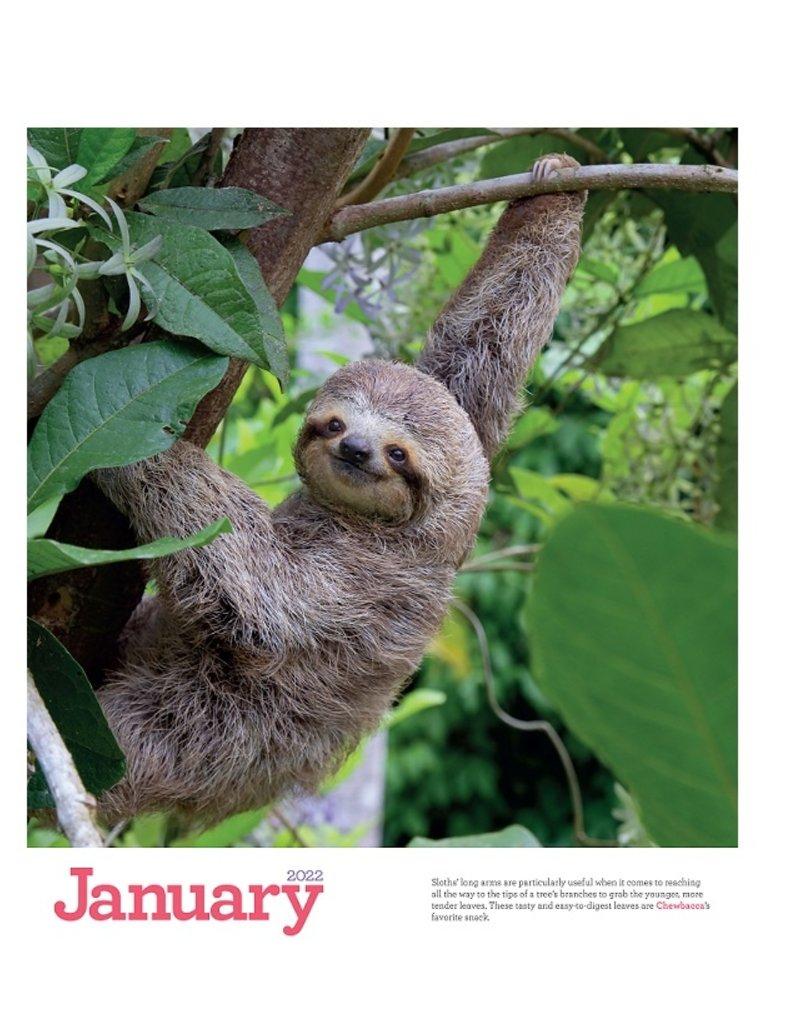 Workman 2022 Wall Calendar Original Sloths