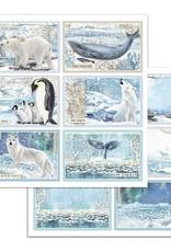 Stamperia 12 x 12 Decorative Paper Arctic Antarctic Cards