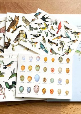 Fairhope Graphics Birds Card Pack