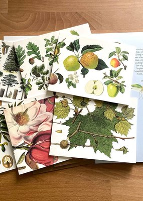 Fairhope Graphics Trees Card Pack