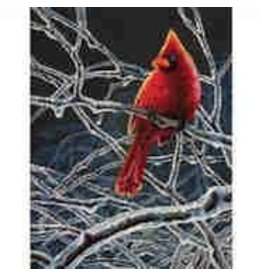 Dimensions Ice Cardinal by Mark Mueller