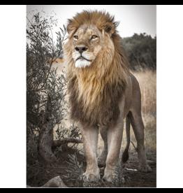 Jumbo Spiele Proud Lion (500 pièces)