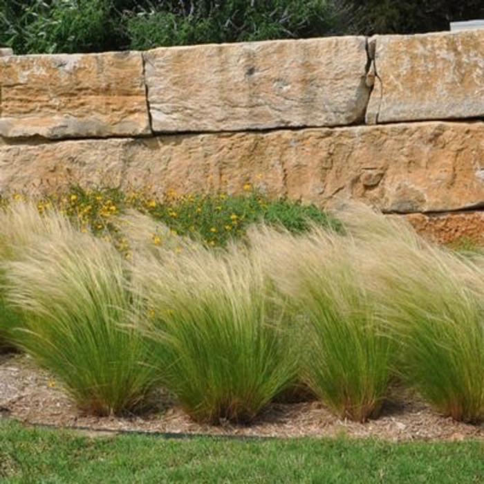 miscellaneous ornamental grasses