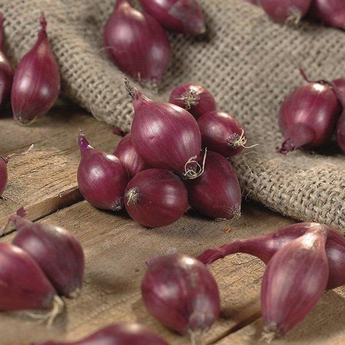 Bulb Onion Sets Red Karmen<br />80/pk