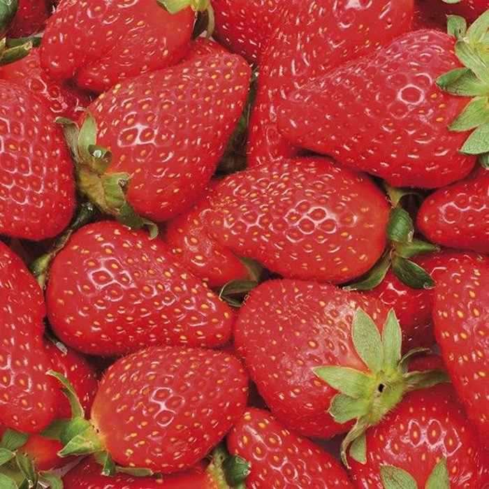 Bulb Strawberry Sequoia June Bearing 10/pk