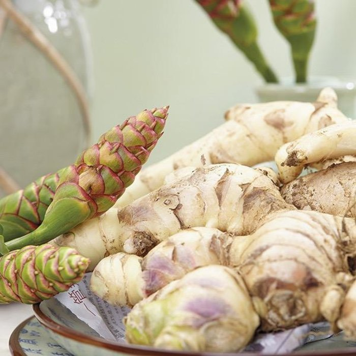 Bulb Ginger Edible 2/pk