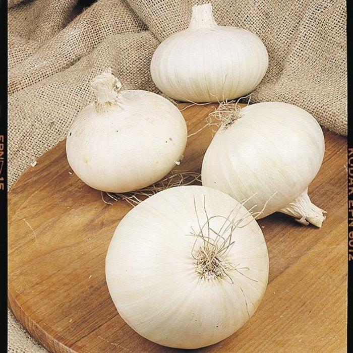 Bulb Onion Sets White Snowball 80/pk