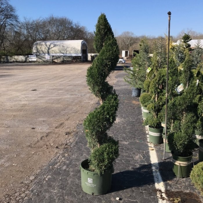 Topiaries & Specialty Forms