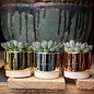 3p! Succulent in Mirrored Pot /Tropical