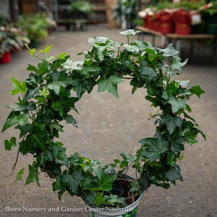 6p! Ivy Hoop Ring Topiary /Tropical