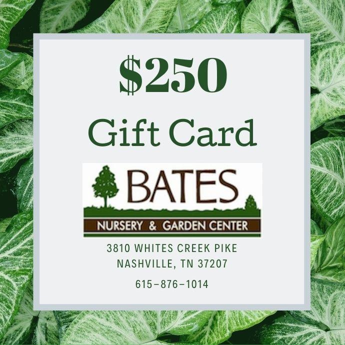 Gift Card for $250
