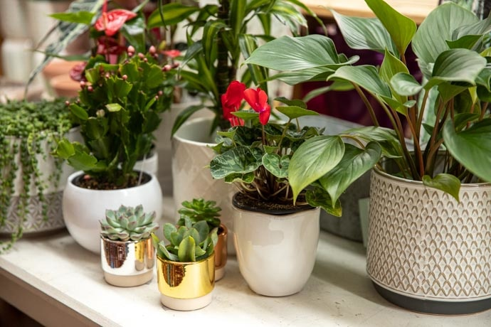 Talk of the Town: Best Indoor Plants for Your Home