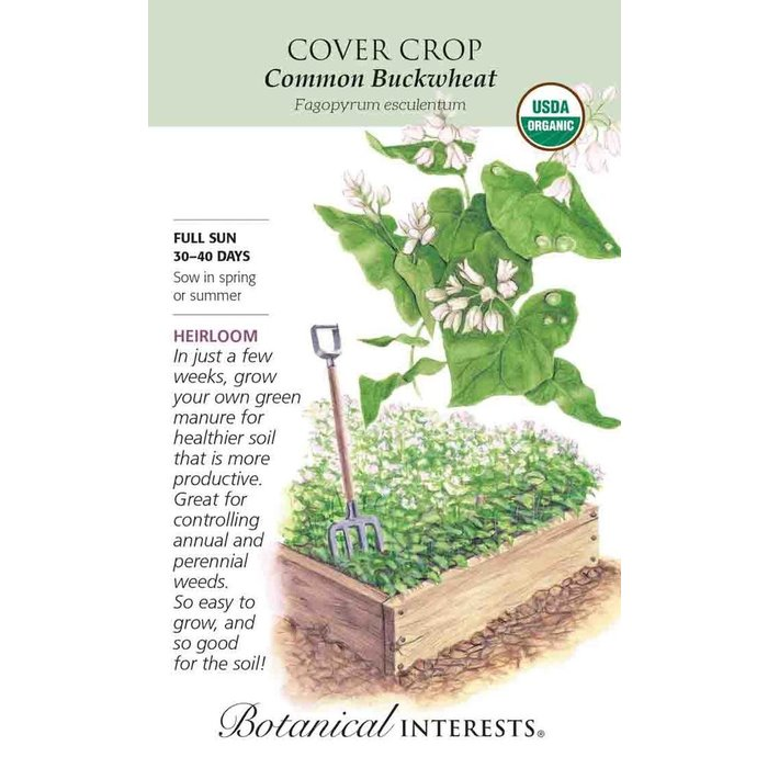 Seed Cover Crop Common Buckwheat Organic Heirloom - Lrg Pkt