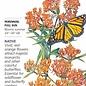 Seed Milkweed Butterfly Flower Native Heirloom - Asclepias tuberosa