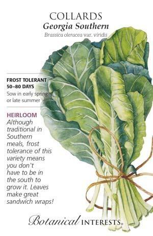Seed Collards Georgia Southern Heirloom - Brassica oleracea