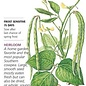 Seed Bean Southern Cowpea California Blackeye Heirloom - Vigna unguiculata