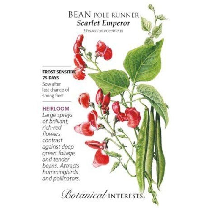 Seed Bean Pole Runner Scarlet Emperor Heirloom - Phaseolus coccineus