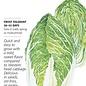 Seed Cabbage Chinese Napa One Kilo Slow Bolt - Brassica rapa (hybrid)