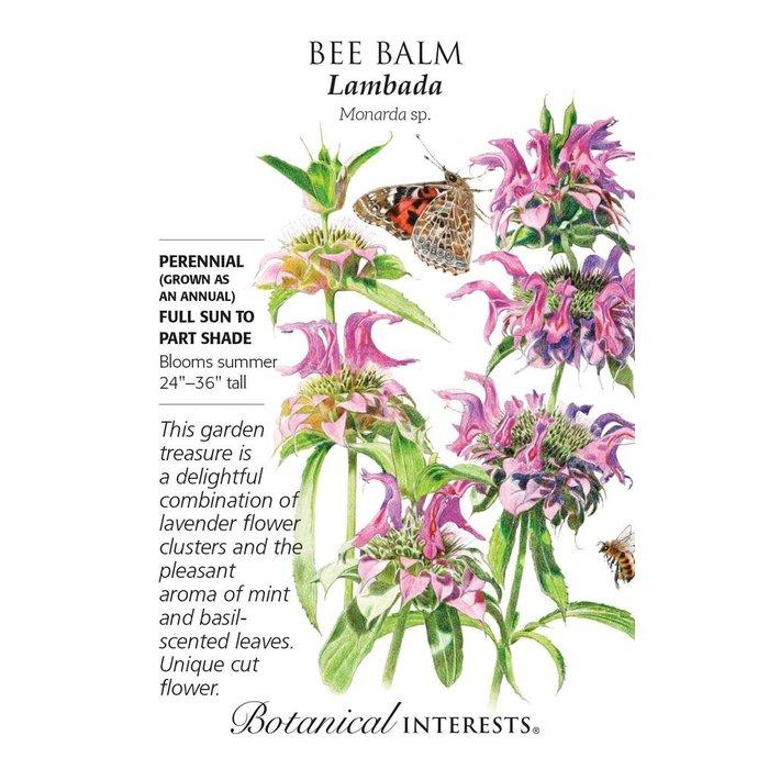 Seed Bee Balm Lambada - Monarda hybrida