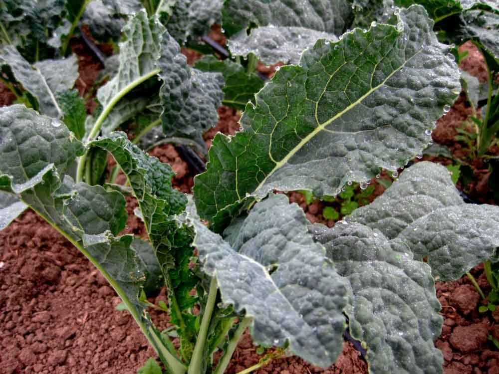 Vegetable Gardening Basics