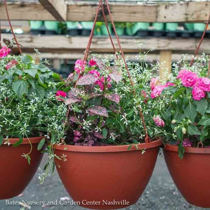 10hb! Hanging Basket Premium Or Mixed 24.99