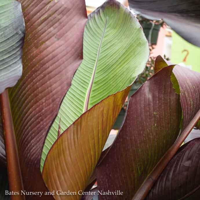 Annuals & Tropicals