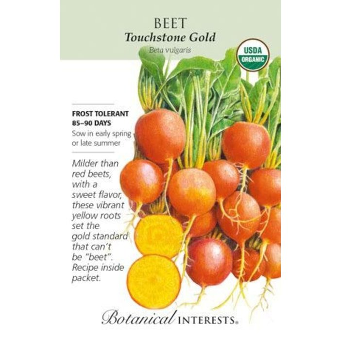 Seed Beet Touchstone Gold Organic - Beta vulgaris