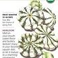 Seed Squash Summer Scallop Jaune et Verte (Patty Pan) Organic Heirloom - Curcurbita pepo