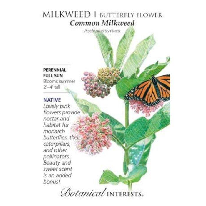 Seed Milkweed Butterfly Flower Common Native Heirloom - Asclepias syriaca