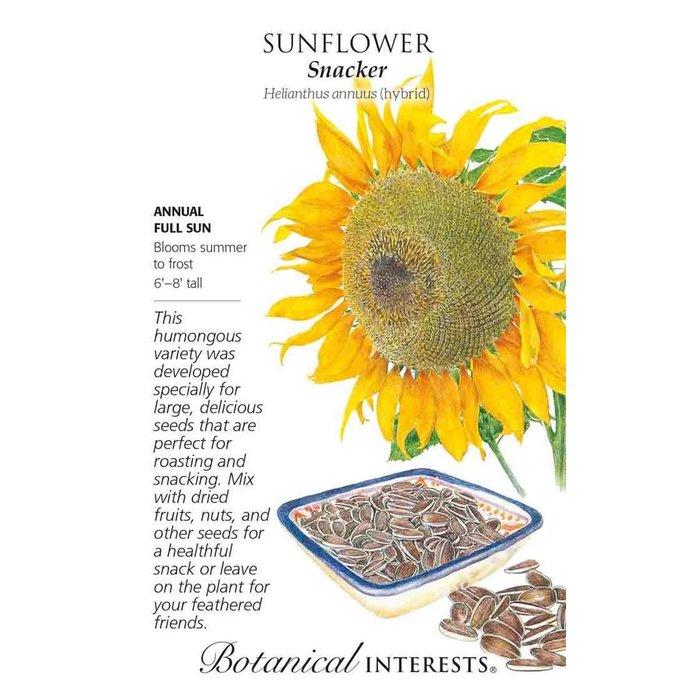 Seed Sunflower Snacker - Helianthus annuus (hybrid) Lrg Pkt