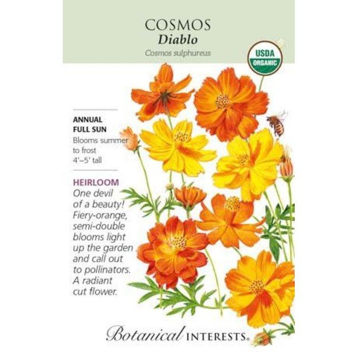 Seed Cosmos Diablo Organic