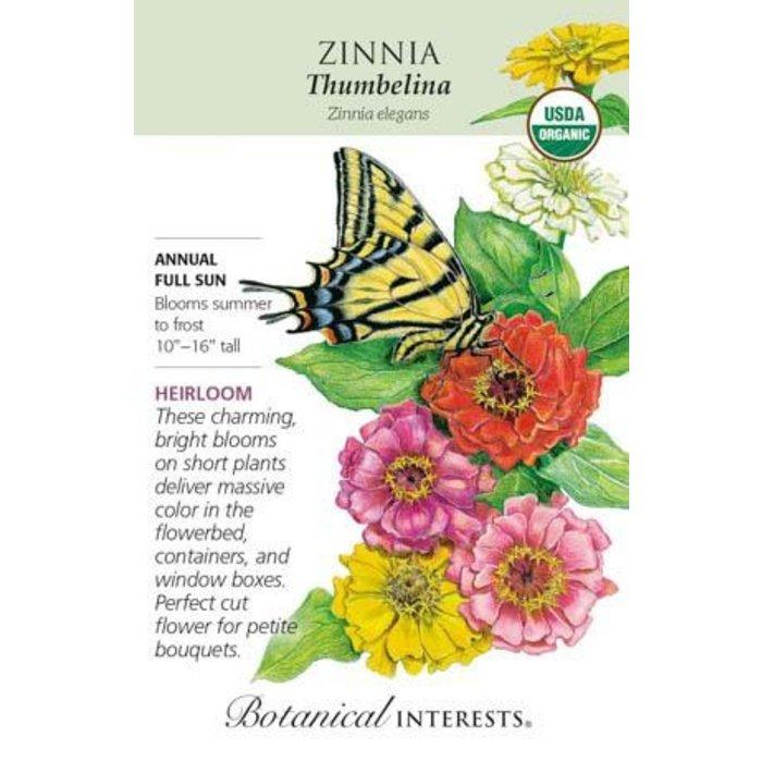 Seed Zinnia Thumbelina Organic - Zinnia elegans
