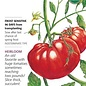 Seed Tomato Pole Beefsteak Organic Heirloom - Lycopersicon lycopersicum