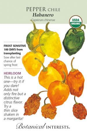 Seed Pepper Chile Habanero Organic Heirloom - Capsicum annuum