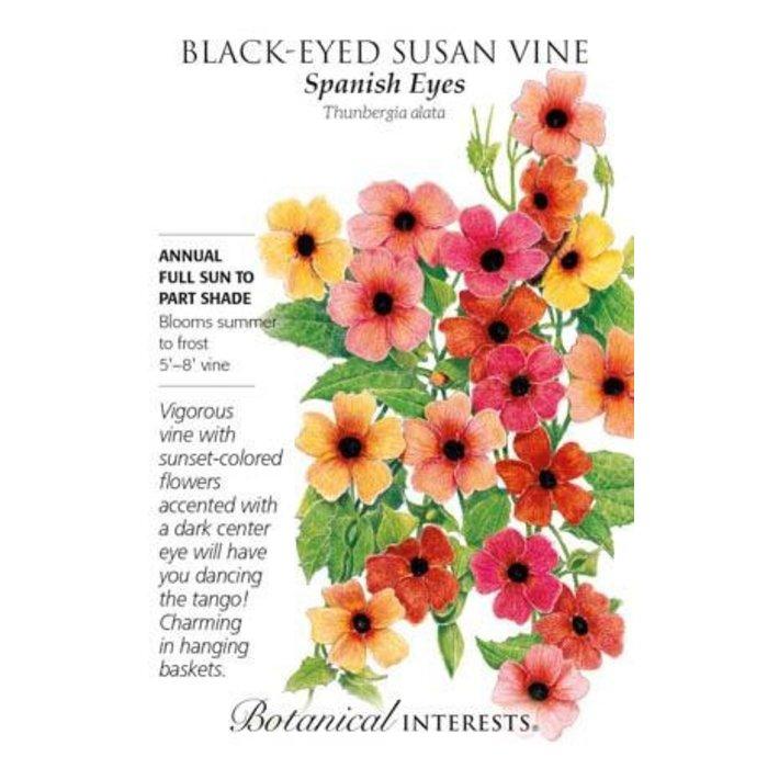 Seed Black-Eyed Susan Vine Spanish Eyes - Thunbergia alata