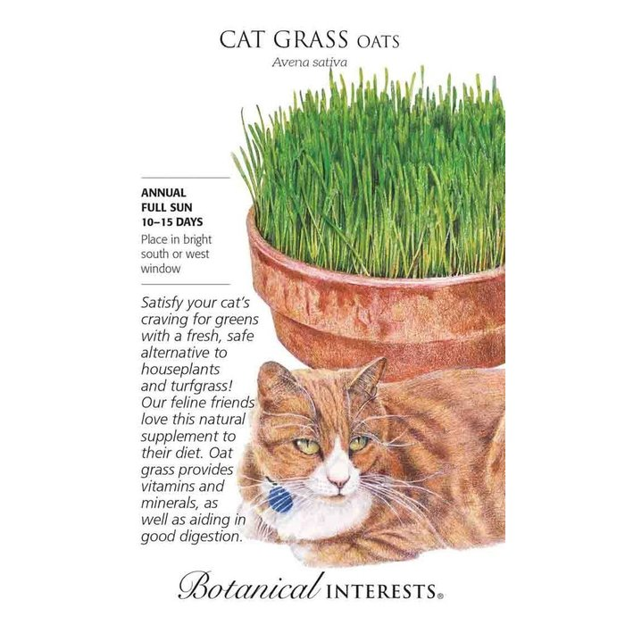 Seed Cat Grass Oats - Avena sativa - Lrg Pkt