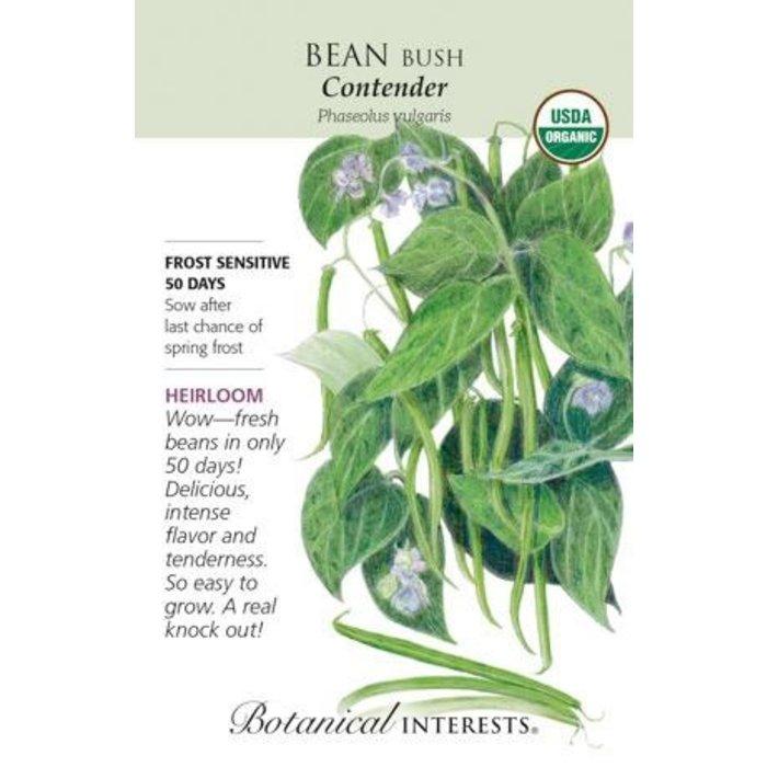 Seed Bean Bush Contender Organic Heirloom - Phaseolus vulgaris